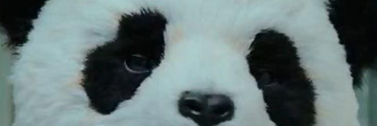 Nunca diga não ao Panda!