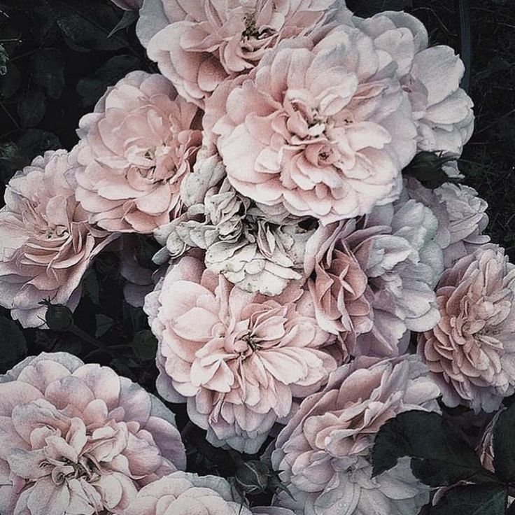 Blooms ayai moody photography flowers photography