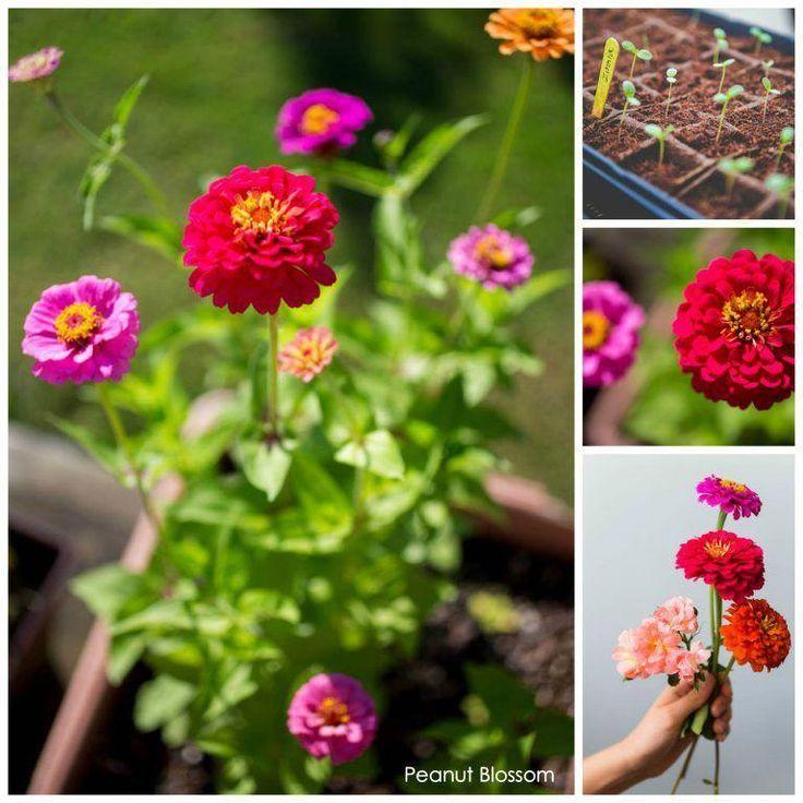 #Gardenforbeginners #How #to #set So richten Sie einen Schnittblumengarten für Anfänger ein …