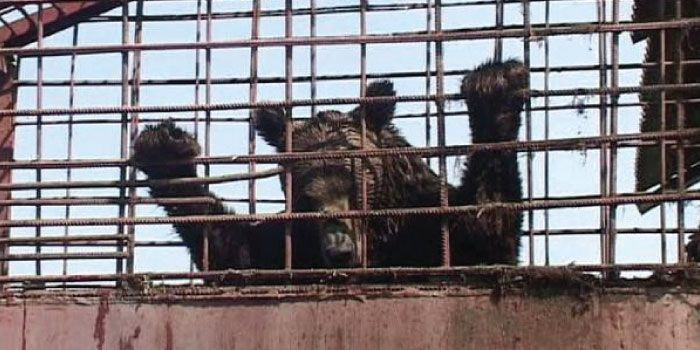 The bears are living in miserable conditions, and the Romanian government needs to seize them as demanded by the law. Sign the petition now! (110 signatures on petition)
