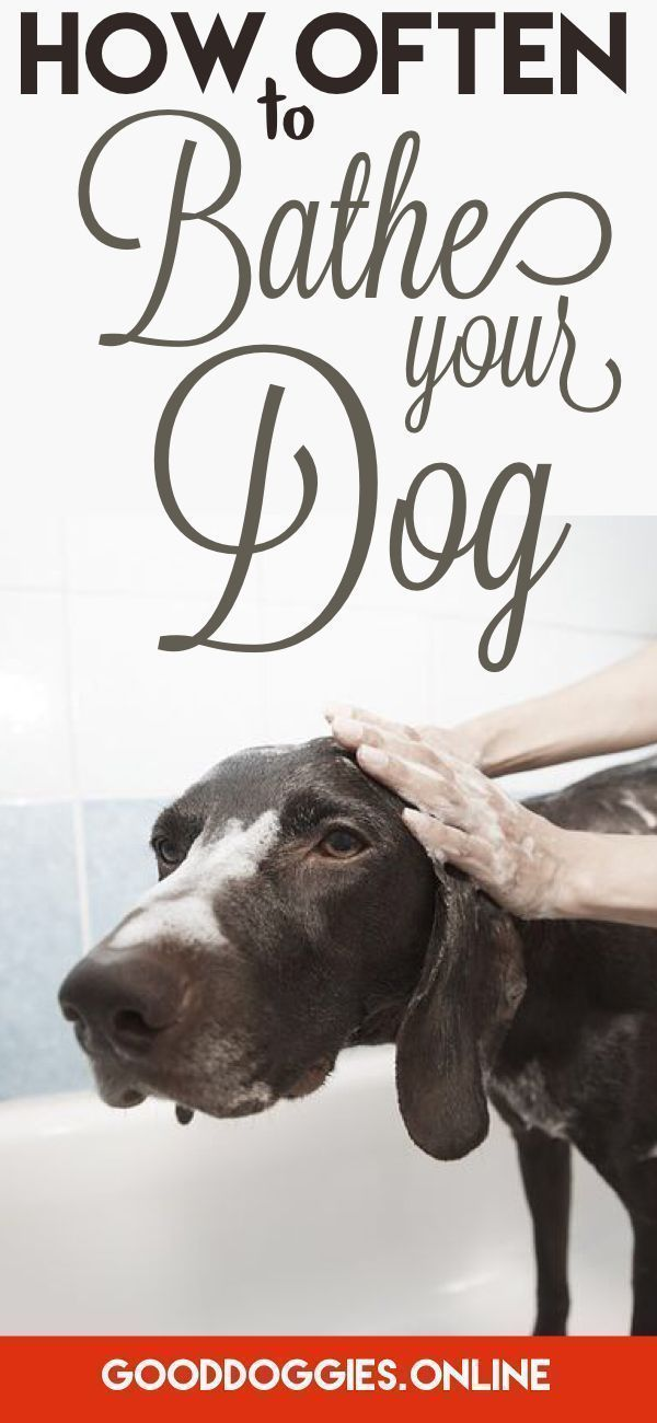 How Often To Bathe A Dog Dog Care Smelly Dog Happy Dogs