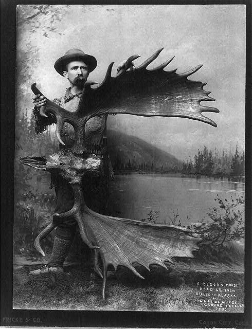 A record moose, head 69 inches, killed in Alaska by Dall De Weese, Canon City, Colo., 1887   vintagehuntingphotos