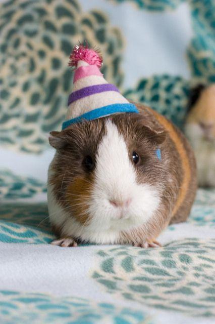 Buffday piggy... Happy buffday, to you... Happy buffday, to you... Happy- hey Where's my cawwot?