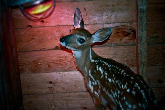 ROZHOVOR: O naději pro divoká zvířata a o tom, jak jich zachránit co nejvíc - National Geographic