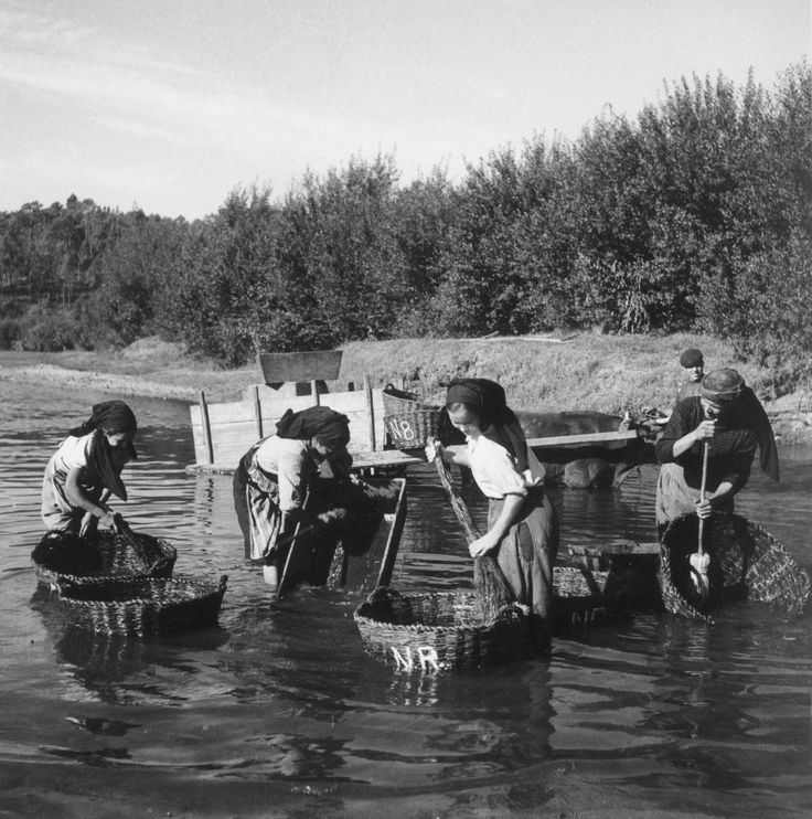 At the end, washing the harvest baskets - somewere in Portugal - photo by Artur Pastor