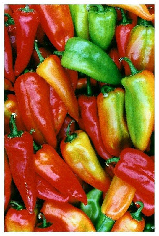Kiszone pomidory, buraki naciowe, grzyby, bakłażany, czosnek, papryka, kalafiory