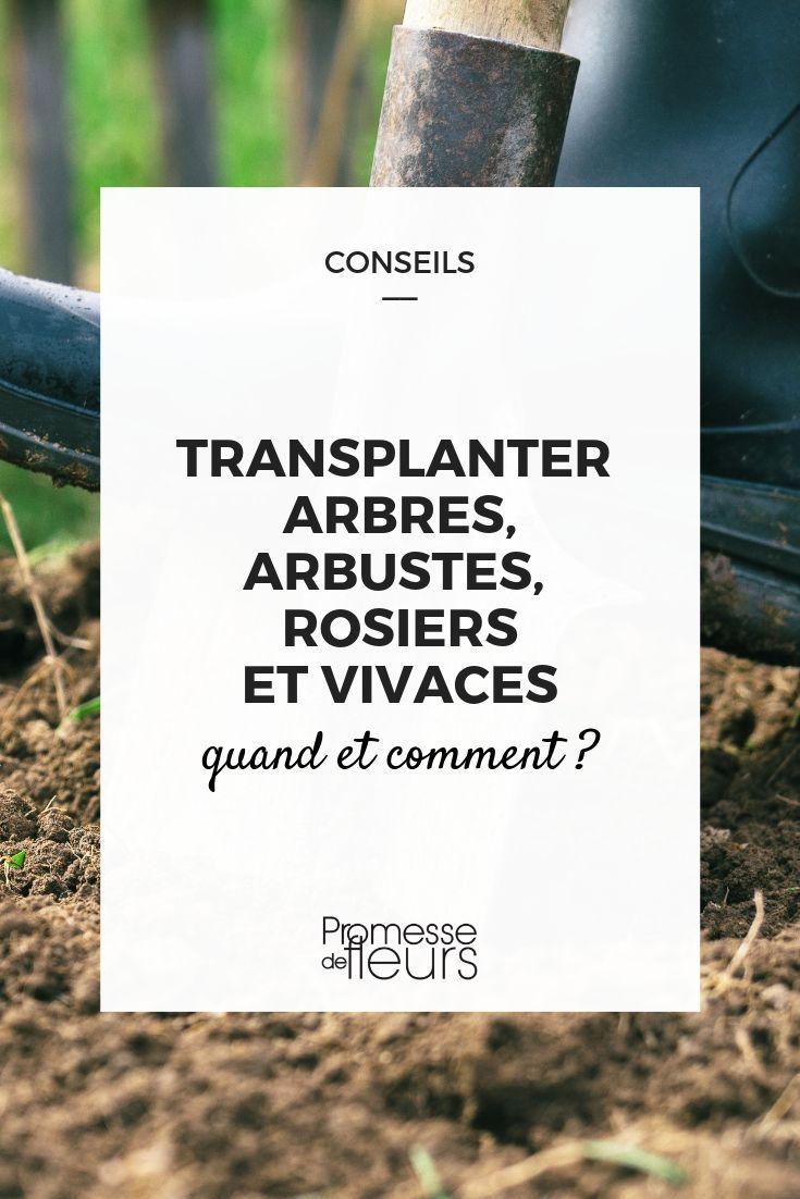 Quand Et Comment Tailler Une Passiflore transplanter arbres, arbustes, rosiers et vivaces : quand et