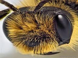 Картинки по запросу как видят насекомые видео