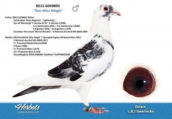 BE11-6049893 • L,B,J GEERINCKX