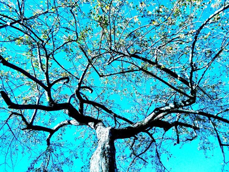 Leaves by ~rayzkodak