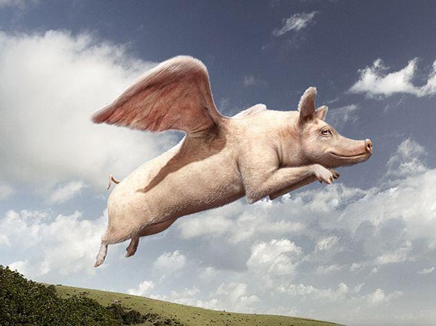 APAVITAL – sefii zboara… pe banii companiei - Ziarul Fapta