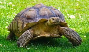 """Résultat de recherche d'images pour """"une tortue"""""""
