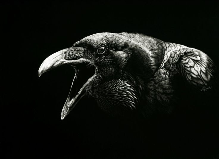 Scratchboard.org | The Site for Scratchboard Artists