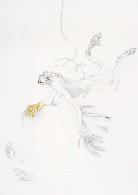 Judith Mason - The origin of species, 2010