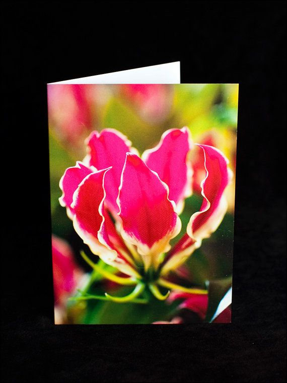Greeting Card  hot pink Gloriosa flower  blank by ErinnaImagery, $4.50