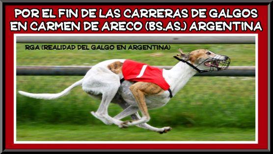 Argentinia: we want an END to the promotion of legalizing Greyhound racing in Carmen de Areco, Buenos Aires! Por el fin de las carreras de galgos en Carmen de Areco (Bs. As.) Argentina