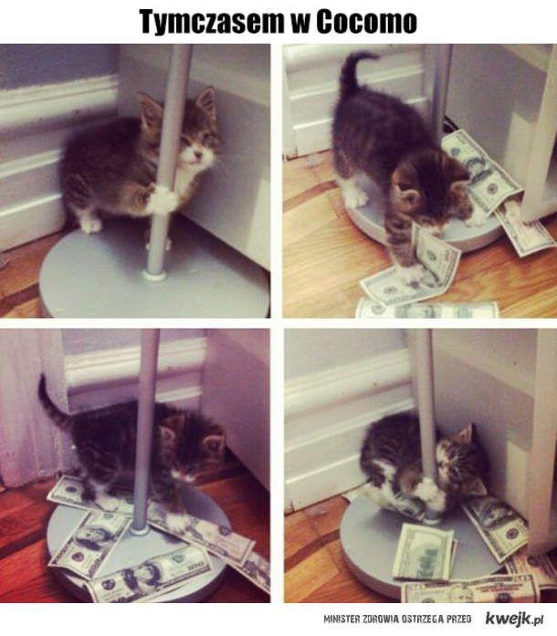 Wydałem wszystkie pieniądze