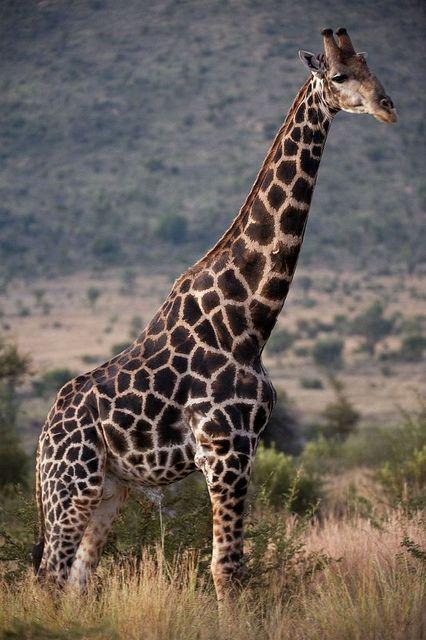 dieren in zuid-afrika