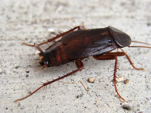 Natural Ways To Get Rid Of Roaches In Your House