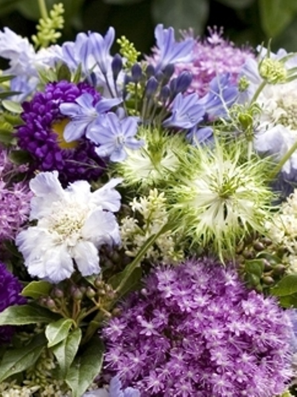 English meadow flowers