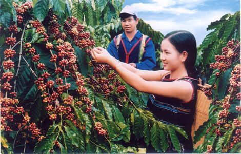 COFFEE FESTIVAL PROMOTING BUON MA THUOT BRAND  The festival aims to highlight the fifth Buon Ma Thuot's Coffee Festival promoting the coffee brand of the Tay Nguyen Central scheduled to take place from March 9-12.