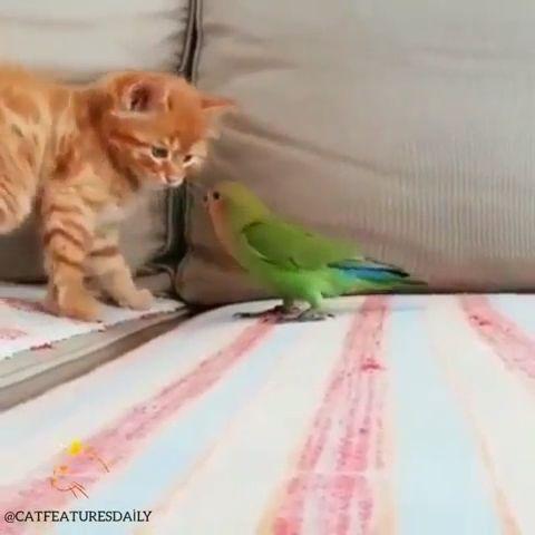 Cute Kitten Doesn't Like Parrot's Baby 😒