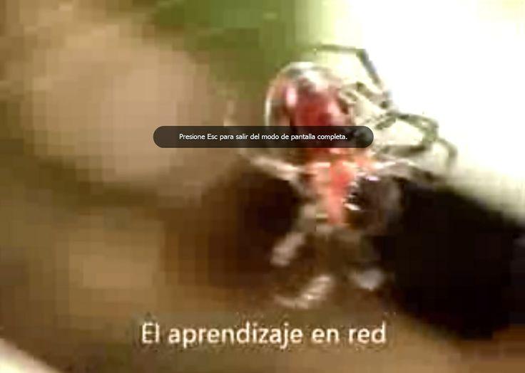 http://aprendizajesenredados.blogspot.com.ar/2013/12/escenariostec-aporte-de-15-segundos-x2.html