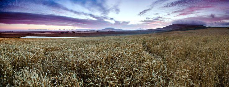 Farmlands    Definitive Light Photography
