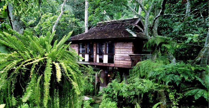 fern paradise guestroom