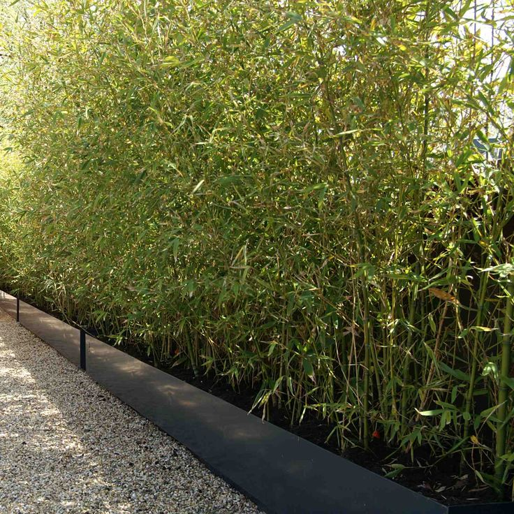 Op maat gemaakte plantenbakken gevuld met bamboe. Ontwerp en aanleg hoveniersbedrijf van Elsäcker Tuin