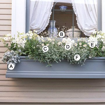 Another Take on White:A. Artemisia 'Silver Broacade' -- 2  B. Baby's breath (Gypsophila elegans) -- 1  C. Daisy (Argyranthemum 'Madeira White') -- 2  D. Stock (Matthiola 'Harmony White') -- 3  E. Nicotiana (Nicotiana 'Saratoga White') -- 4  F. Snow-in-summer (Cerastium tomentosum) -- 2