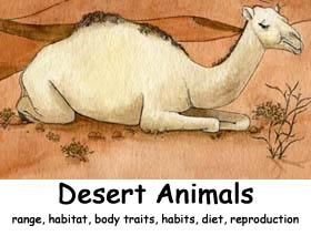 Desert animal information (use to make desert animal cards)