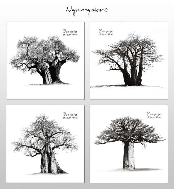 Baobabs of South Africa - Coasters     These coasters feature breath-taking photographs of Africa's majestic Baobab trees.     Buy online at NguniGalore.com - Delivery to anywhere in South Africa is FREE