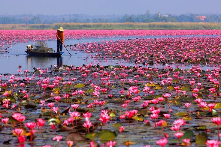 Red Lotus Sea or Talay Bua Daeng located in Udonthani, Thailand