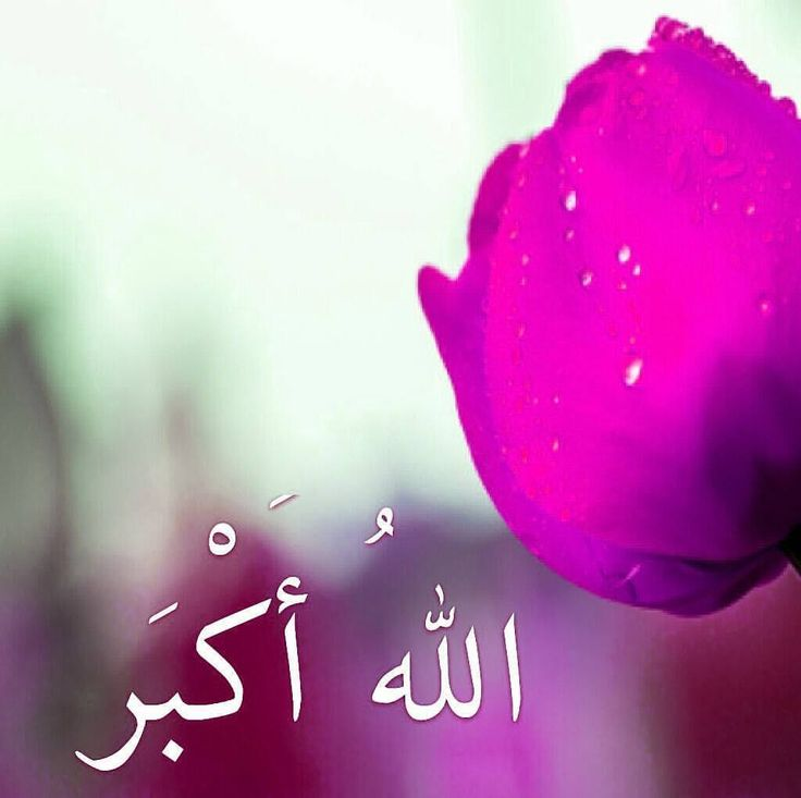 THINK BLUE: . فەزڵ و گەورەیی (سبحان الله)و(الحمد لله)و(لا إله إلا الله) و (الله أكبر) کردن . - پێغەمبەری خودا (صلى الله عليه وسلم) دەفەرمووێت: ھەر کەسێک لە ڕۆژێکدا سەد جار بڵێت: (سبحان الله وبحمده) ئەوە تاوانەکانی دەسڕێنەوە خۆ ئەگەر بە ئەندازەی کەفی دەریاش بێت .  واتە: (پاک و بێگەردی و ستایش بۆ خودایە) . . - پێغەمبەری خودا (صلى الله عليه وسلم) دەفەرمووێت: ھەر کەسێک دە جار بڵێت: (لا إله إلا الله وحده لا شريك له له الملك وله الحمد وهو على كل شيء قدير) ئەوە وەکو ئەوە وایە کە چوار کۆیلە لە…