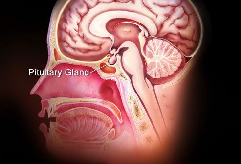 Pituitary Gland Symptoms in Women ** Click image to review more details.