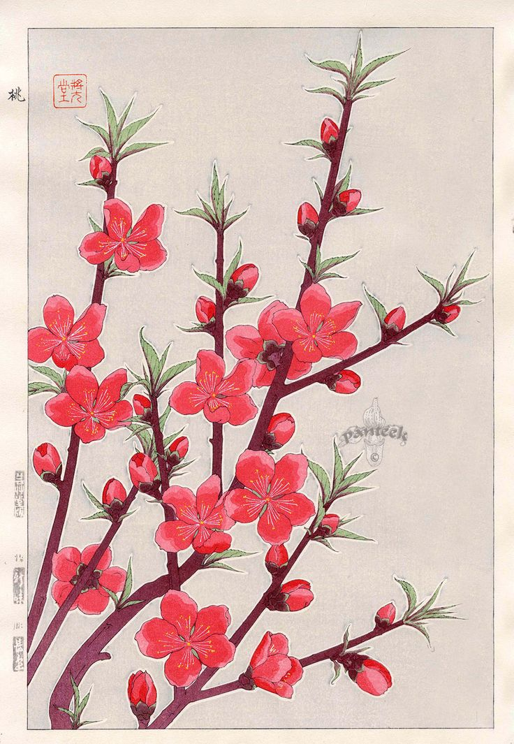Peach Blossoms from Shodo Kawarazaki Spring Flower
