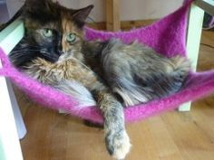 DIY cat hammocks that go beneath just about any chair.  by All for naught - Fritzi Katzenpension