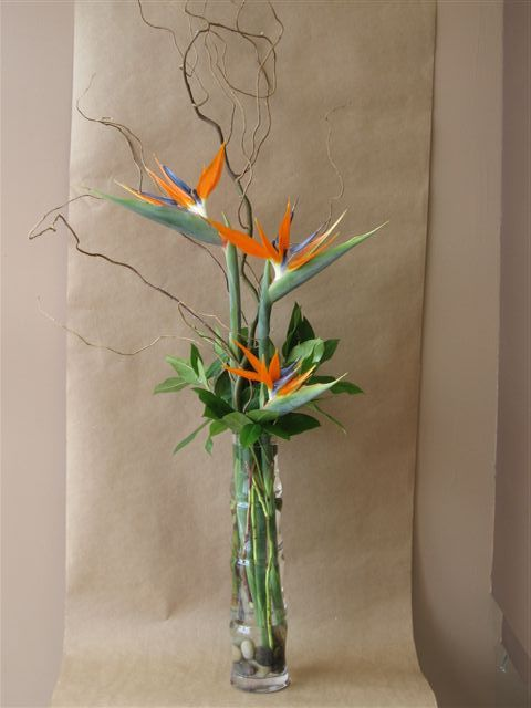 Tall glass bamboo vase with birds of paradise, curly willow branches, leaves and greenery