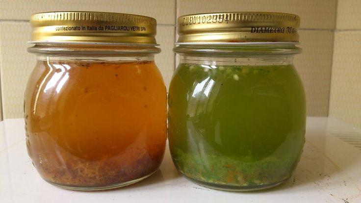 11 fertilizantes e pesticidas orgânicos feitos em casa - greenMe.com.br