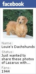Find Upcoming Dachshund Litters Here! Louie's Miniature Dachshunds Breeder in NC offers Dachshunds Puppies for Sale – Click for Details!