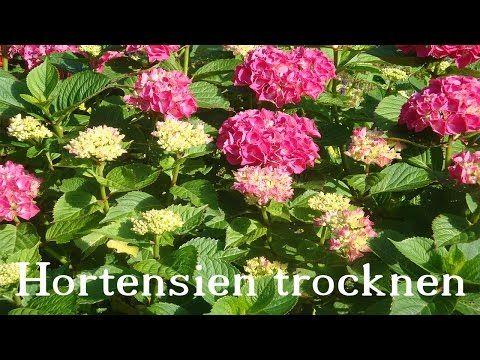 blumenstrauss trocknen hortensien flora shopeu wie