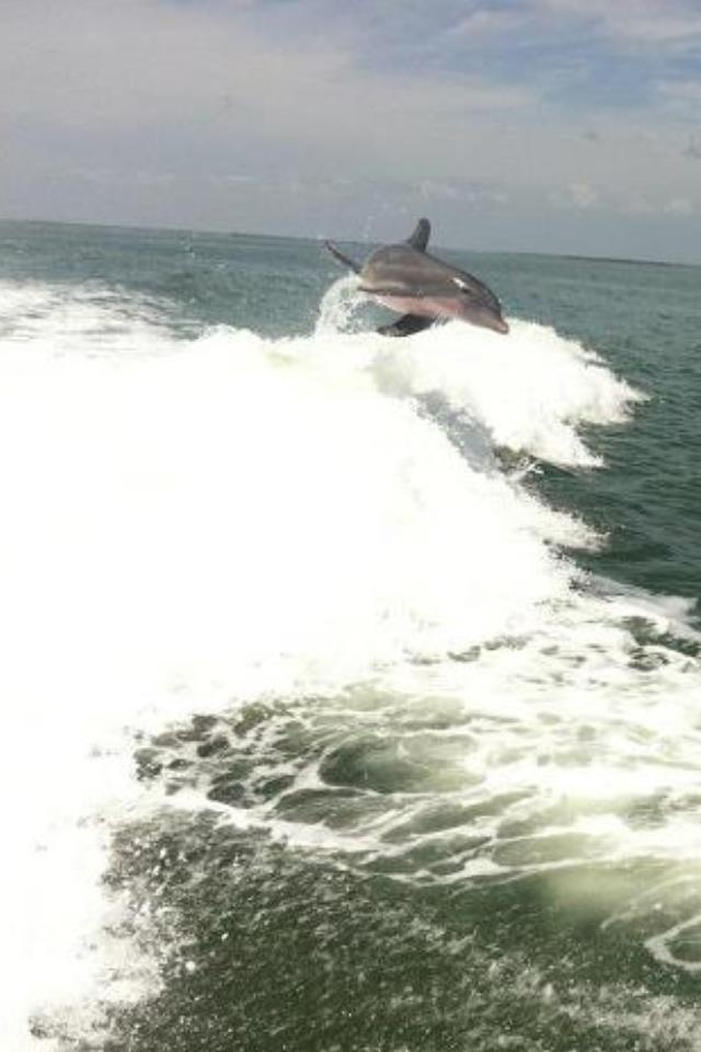 Dolphin Catching Big Air From Boat Wake   Boat wake, Sand ...