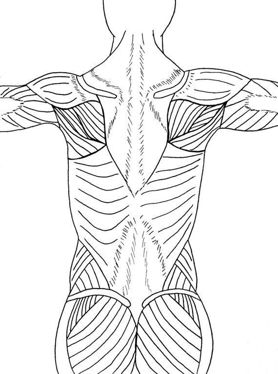 yoga in color a yoga anatomy coloring exploration yoga - Yoga Anatomy Coloring Book