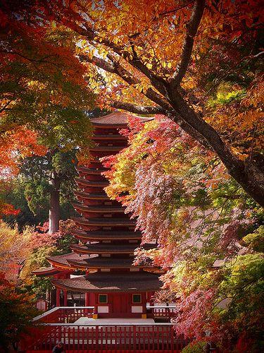 L'un des paysages automnale à Nara....(Japon)