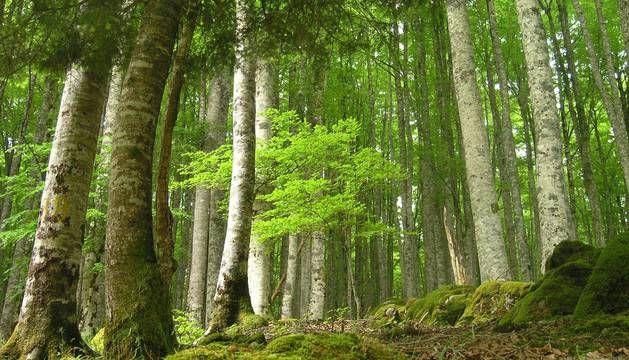 La Selva del Irati descubre su magia