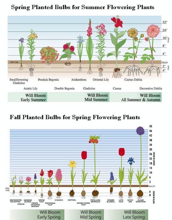http://www.bulbs-to-blooms.com/index.cfm/fuseaction/home.GGpage/pageID/162/index.htm what to plant, when to plant and how deep to plant to get blooms all spring and summer.