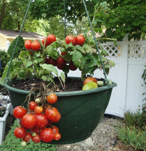Garden   Landscaping  Nice Exterior Design With Vegetables Container  Gardening Ideas On Hanging Plastic Pot. 42 best Container Gardenging images on Pinterest   Vegetables