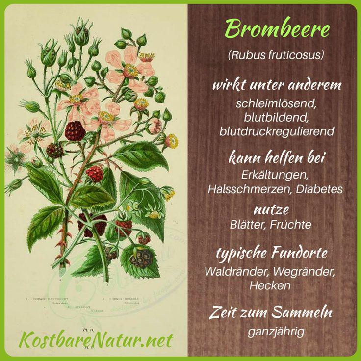Brombeeren - Rezepte und Anwendungen für deine Gesundheit