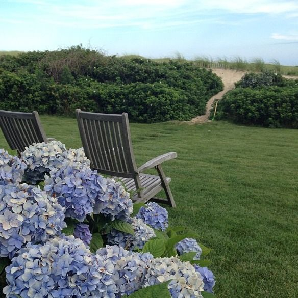We love all of the hydrangeas that pop up during a New England summer!